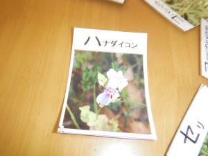野草のカルタ取り大会!!